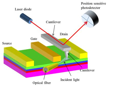 The Applications of Atomic Force Microscopy to Vision Science
